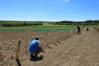 L'agglomération a mis à disposition ces terres pour relancer la production viticole sur le territoire du grand dijonnais.