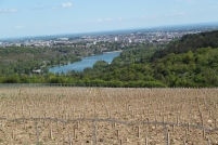 Le plateau servira aussi à la création d'un conservatoire de vignes. Inra et Jardin des Sciences y étudient la biodiversité.