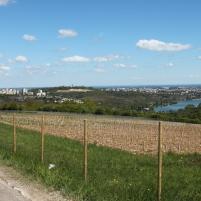 Là aussi, on plante de nouvelles terres en vigne.