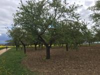 De nombreux vergers occupent un espace mité par des jardins familiaux.