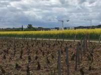 C'est la polyculture qui domine, mêlant vignes, céréales et arbres fruitiers.